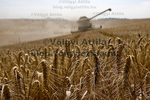 Wheat harvest is in progress in Gyermely limited.