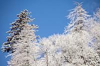 A Wonderful Winters Day