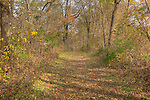 Fallen Leaves carpet a nature trail at Scott County Park in southeast Iowa.