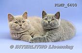Marek, ANIMALS, REALISTISCHE TIERE, ANIMALES REALISTICOS, cats, photos+++++,PLMP6400,#a#