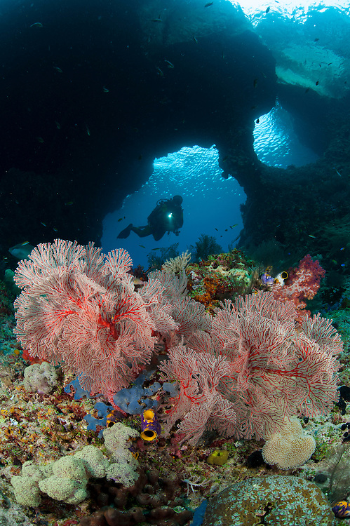 "A diver approaches a gorgonian through ""Boo Windows"" Southern Raja Ampat, West Papua, Indonesia"