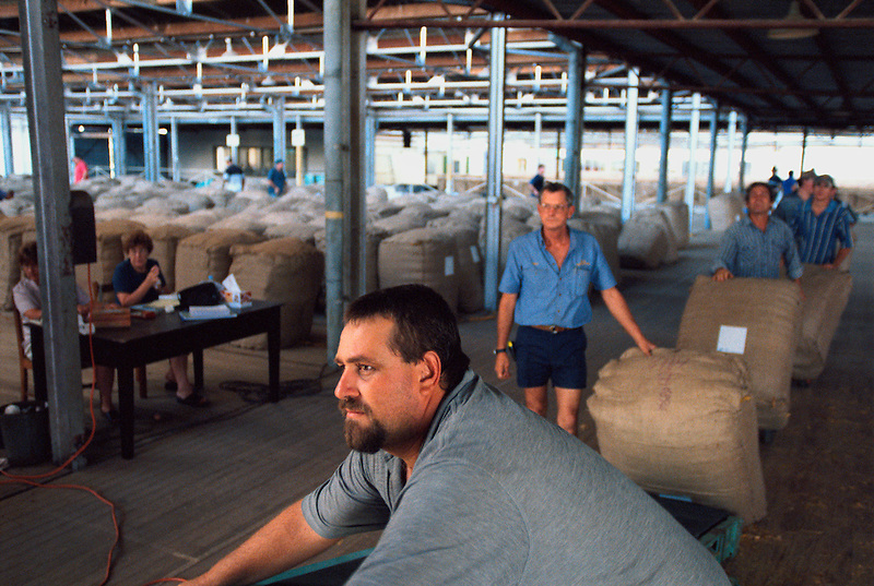 Loading the Bales 1, Frank Morelli (f), Mareeba Sales Floor, Mareeba, 2004.