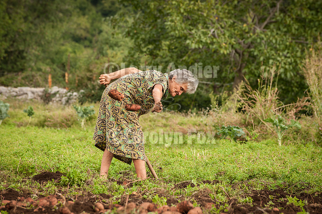 An old woman harvests her potatoes in a farm plot in Krusevice, home town of the family of Fr. Sebastian Dabovich before they immigrated to the U.S. in the 1860s.