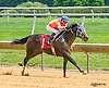 Western Conqueror winning at Delaware Park on 7/7/16