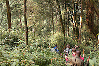 Group of people trekking through Nyungwe National Park, Rwanda