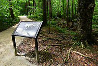 NWA Democrat-Gazette/FLIP PUTTHOFF <br /> Improvements to the trail through Lost Valley      May 3 2019     were part of the work.