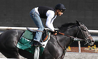 Mizdirection for trainer Mike Puype working on the turf at Santa Anita Park in Arcadia California