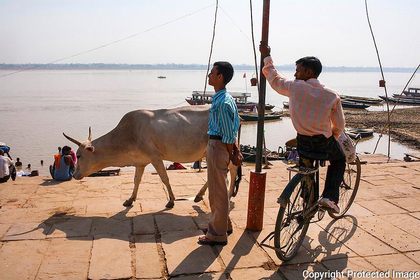 Cyclist at the Ghat,Varanasi , INDIA.