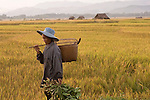 A farmer returns home from working in the field in Luang Namtha, Laos on November 9, 2009.   (Photo by Khampha Bouaphanh)