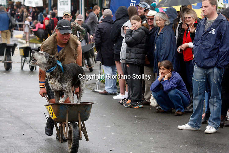 Hunterville, New Zealand - October 27, 2018 - A shepherd races with his barking dog in a wheelbarrows during the annual Shemozzle obstacle race that is held in this small rural town. This annual event, in which the canines and shepherds tackkle mudslides, ride in wheel barrows and carry bulls testicles, draws thousands every year to this town of less than 500 people. Picture: Giordano Stolley