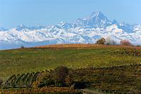 Italien, Piemont, Region Langhe, Weinberge vor der Bergkette Alpi Cozi mit Gipfel Monviso (3.841 m) | Italy, Piedmont, Region Langhe, vineyard, Alpi Cozi mountains with peak Monviso (3.841 m)