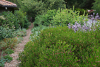 Mulched path through side yard by street with evergreen shrub privacy hedge border in California native plant garden, Schino