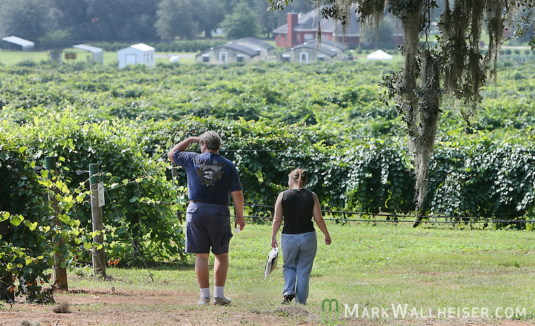 Romas Sparks, left, and Ursula Kochanowsky tour the vinyards during the 2007 Annual Grape Harvest Festival held at the FAMU Center for Viticulture and Small Fruit Research Center at 6505 Mahan Drive Saturday August 25, 2007.    (Mark Wallheiser/TallahasseeStock.com)