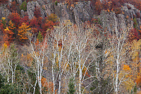 Changing seasons lay bare a stand of aspens along granite bluffs, Keewenaw Peninsula, Michigan.