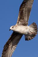 2012 January - Pelagic Birds and Owls