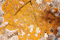 Orange Lichens growing on rocks