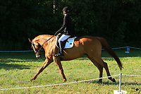 Dressage - Morgan Gracey
