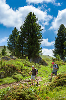 Italy, South Tyrol (Trentino - Alto Adige), Dolomites, near Selva di Val Gardena: hiking through alpine pasture | Italien, Suedtirol (Trentino - Alto Adige), oberhalb von Wolkenstein in Groeden: Wanderer unterwegs  auf Almwiese
