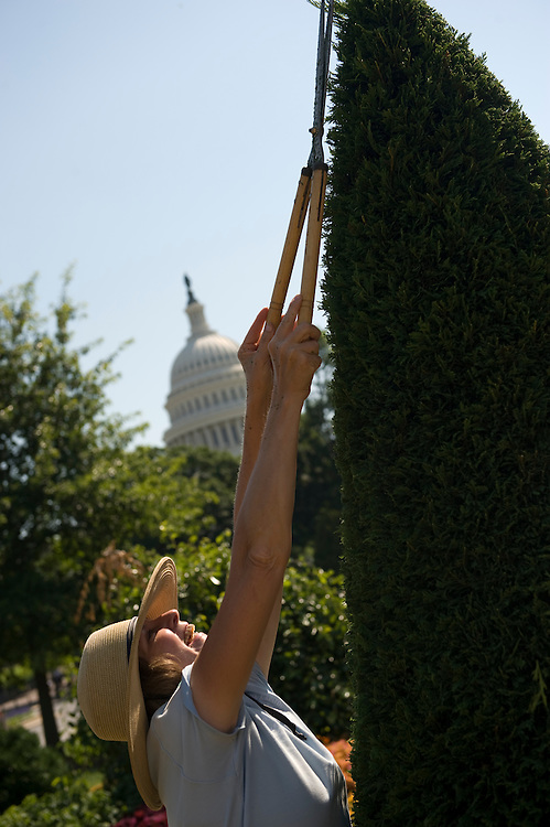 Beth Ahern, a gardener with the Architect of the Capitol, trims a Leyland Cypress tree at the U.S. Botanic Garden, July 1, 2009.