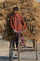 BANGLADESH, Tangail,  transport of rice straw by bicycle rickshaw / BANGLADESCH, Tangail, Transport von Reisstroh mit Fahrradrikscha