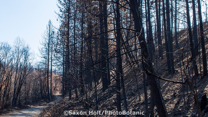 Delta Fire aftermath; Shasta-Trinity National Forest, California