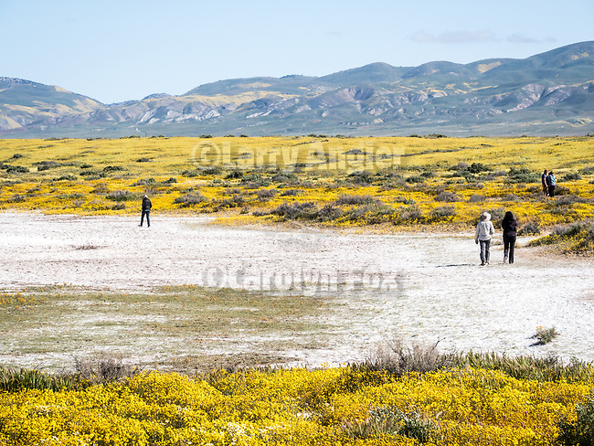 Tidy tip and goldfield wildflowers cover the Carrizo Plain National Monument