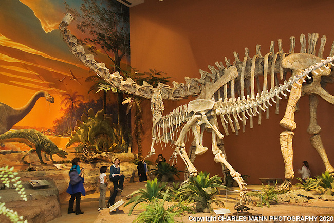 Visitors stroll beneath giant dinosaur skeletons at the New Mexico Museum of Natural History &Science in Albuquerque.