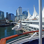 a seagull sits on the railing of a cruise ship docked at Vancouver B C