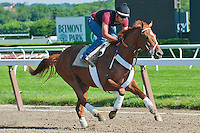 I'll Have Another jogs over the Belmont main track in preparation for the 2012 G1 Belmont Stakes at Belmont Park in Elmont, NY.