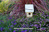 63821-22314 Birdhouse in garden with Lavender Lace Mexican Heather (Cuphea hyssopfolia), Blue Violet Verbena (Verbena tapien) and Fireworks Red Fountain Grass (Pennisetum setaceum 'Fireworks') Marion Co., IL