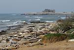 elephant seals, Ano Nuevo Island