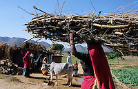 "S?dasien Asien Indien IND Rajasthan .Frau traegt Feuerholz zum Kochen auf dem Kopf ins Dorf -  Energie Brennmaterial Brennstoffe Holz Abholzung laendliche Dorf xagndaz | .South Asia India Rajasthan .woman carry firewoods in village for cooking fuel -  energy resources wood fire timber women .| [ copyright (c) Joerg Boethling / agenda , Veroeffentlichung nur gegen Honorar und Belegexemplar an / publication only with royalties and copy to:  agenda PG   Rothestr. 66   Germany D-22765 Hamburg   ph. ++49 40 391 907 14   e-mail: boethling@agenda-fototext.de   www.agenda-fototext.de   Bank: Hamburger Sparkasse  BLZ 200 505 50  Kto. 1281 120 178   IBAN: DE96 2005 0550 1281 1201 78   BIC: ""HASPDEHH"" ,  WEITERE MOTIVE ZU DIESEM THEMA SIND VORHANDEN!! MORE PICTURES ON THIS SUBJECT AVAILABLE!! INDIA PHOTO ARCHIVE: http://www.visualindia.net ] [#0,26,121#]"