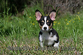Bob, ANIMALS, REALISTISCHE TIERE, ANIMALES REALISTICOS, dogs, photos+++++,GBLA4359,#a#, EVERYDAY