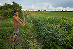 Valdis Santos de Marang, 11, stands at the fence separating his village from huge fields of soybeans that have taken over community land in the Quilombo Bom Jardim, outside Santarem, Brazil. Soy is being planted throughout Brazil. Most of it is shipped to China.