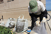 Hyde Park celebrated Earth Day this past Saturday with environmentally friendly events around the neighborhood.<br /> <br /> 8155 &ndash; President of the Jackson Park Advisory Council, Loise Mcurry sorts the garbage collected that was collected at 63rd Street Beach so that it can be disposed of properly.<br /> <br /> Please 'Like' &quot;Spencer Bibbs Photography&quot; on Facebook.<br /> <br /> All rights to this photo are owned by Spencer Bibbs of Spencer Bibbs Photography and may only be used in any way shape or form, whole or in part with written permission by the owner of the photo, Spencer Bibbs.<br /> <br /> For all of your photography needs, please contact Spencer Bibbs at 773-895-4744. I can also be reached in the following ways:<br /> <br /> Website &ndash; www.spbdigitalconcepts.photoshelter.com<br /> <br /> Text - Text &ldquo;Spencer Bibbs&rdquo; to 72727<br /> <br /> Email &ndash; spencerbibbsphotography@yahoo.com