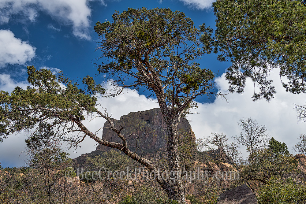 A little closer view from through the trees of Casa Grande peak in Big Bend National Park.