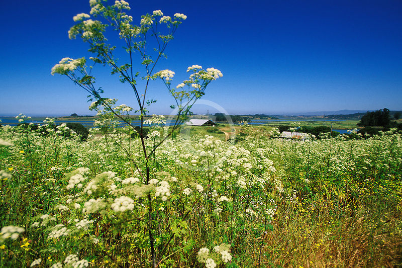 California, Moss Landing, Elkhorn Slough Reserve