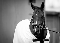 ARCADIA, CA - APRIL 01: Bolt d'Oro cools out at the barns after working out in preparation for the Santa Anita Derby at Santa Anita Park on April 01, 2018 in Arcadia, California. (Photo by Alex Evers/Eclipse Sportswire/Getty Images)