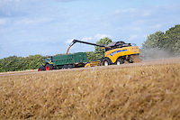 Harvesting winter wheat with a New Holland CX8070 - Lincolnshire, August