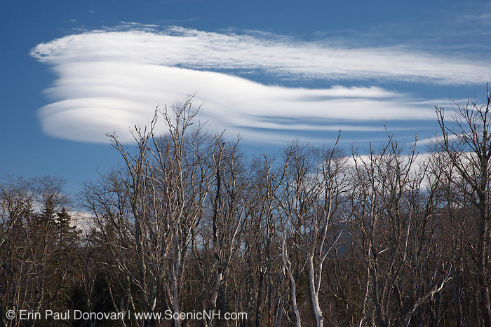 Lenticular clouds (Altocumulus lenticularis)  over forest along the Kancamagus Highway in the White Mountains, New Hampshire USA