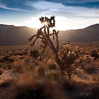 Joshua Tree Landscapes