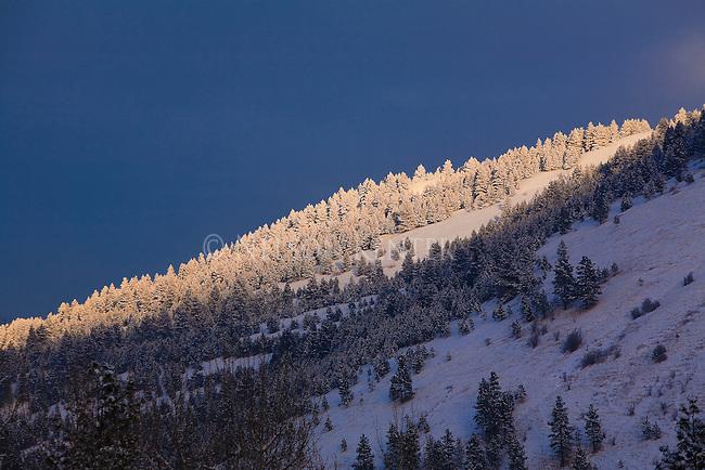 The sun spot lights snow covered trees on Mount Jumbo above Missoula, Montana