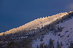 The sun spot lights snow covered trees on Mount Jumbo above Missoula, Montana