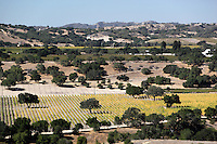 United States of America, California, Santa Barbara County, Near Los Olivos: Santa Ynez Valley vineyards | Vereinigte Staaten von Amerika, Kalifornien, Santa Barbara County, bei Los Olivos: Weinberge im Santa Ynez Valley