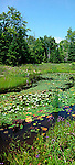Beaver pond in summer, Lanark County, Ontario, Canada