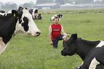 Foto: VidiPhoto<br /> <br /> KEKERDOM &ndash; Melkveehouder Herman Scholtens uit Kekerdom tussen zijn koeien. Scholtens bezit 200 melkkoeien en heeft geen opvolger. Hij kiest er voor om niet meer te investeren in zijn bedrijf.