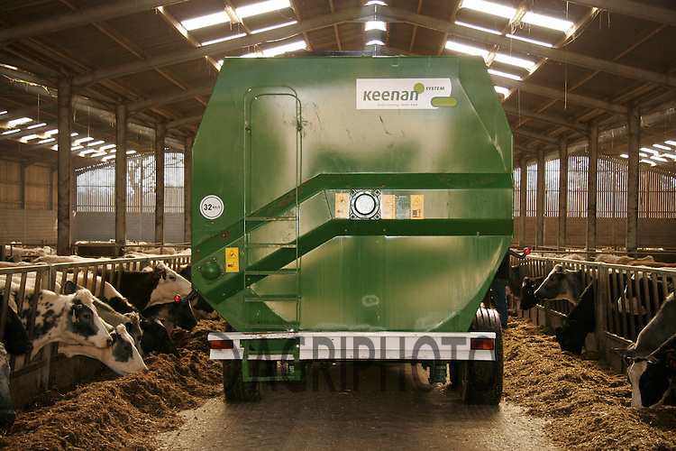 Silage being fed to beef cattle out off a  feeder wagon