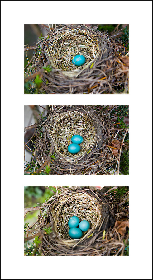 Robin's Eggs- Three for Three - triptych