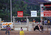 Bronco busting at the Waimanalo Rodeo, windward Oahu, Hawaii