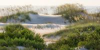 Soft sunrise light on sand dunes on the Atlantic Coast.